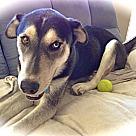 Adopt A Pet :: Handsome Bentley