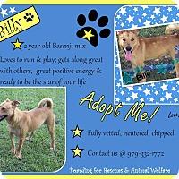 Adopt A Pet :: Billy - El Campo, TX