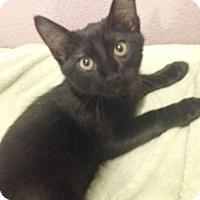Adopt A Pet :: Churchill - North Highlands, CA