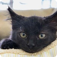 Adopt A Pet :: Athena - Merrifield, VA