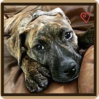 Adopt A Pet :: Punkin - Miami, FL