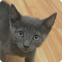 Adopt A Pet :: Coal - Gainesville, FL