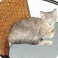 Adopt A Pet :: GRETTA - Hampton, VA