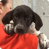 Adopt A Pet :: Pete - Buffalo, NY