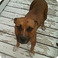 Adopt A Pet :: Millie - McAllen, TX