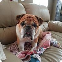 Adopt A Pet :: Bodie - Odessa, FL