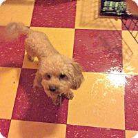 Adopt A Pet :: Finn - Tavares, FL