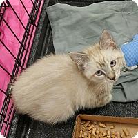 Adopt A Pet :: Patrick - Carencro, LA