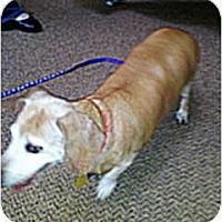 Adopt A Pet :: Mitzi - Forest Ranch, CA