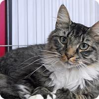 Adopt A Pet :: Paws - Winchendon, MA