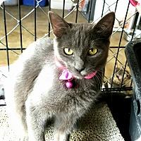 Adopt A Pet :: Birdie - Fallbrook, CA