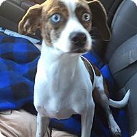 Adopt A Pet :: Missy - Vidor, TX