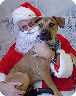 Labrador Retriever/Hound (Unknown Type) Mix Dog for adoption in New York, New York - Roscoe (MD)