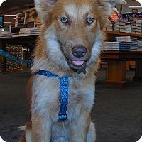 Adopt A Pet :: Korma - Memphis, TN