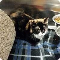 Adopt A Pet :: Freya (in CT) - Manchester, CT