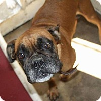 Adopt A Pet :: Biscuit - Denver, CO