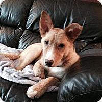 Adopt A Pet :: Lyla - Saskatoon, SK