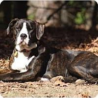 Adopt A Pet :: Belle - Fresno, CA