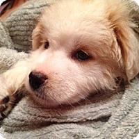 Adopt A Pet :: Nevilla Pup - Foster, RI