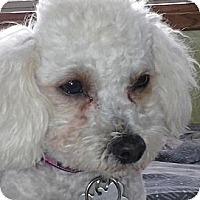 Adopt A Pet :: Ella - La Costa, CA