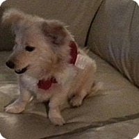 Adopt A Pet :: Lizzy - Saskatoon, SK