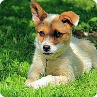 Adopt A Pet :: Humphery - Brattleboro, VT