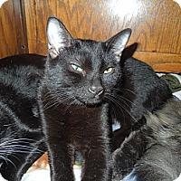 Adopt A Pet :: Pierre - Medina, OH