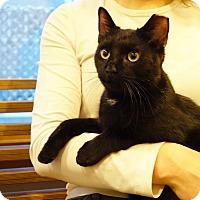 Adopt A Pet :: Joao - Brooklyn, NY