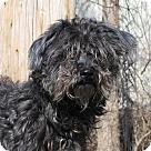 Adopt A Pet :: 15441