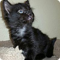 Adopt A Pet :: Tenderheart - Phoenix, AZ