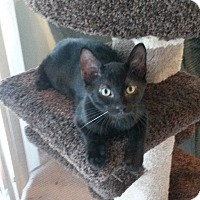 Adopt A Pet :: Thunder - bloomfield, NJ