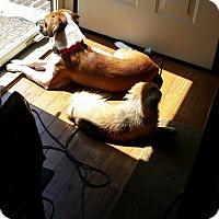 Adopt A Pet :: Murphy- Urgent - Providence, RI