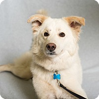 Adopt A Pet :: Juno - Minneapolis, MN
