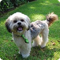 Adopt A Pet :: CURTIS - Los Angeles, CA