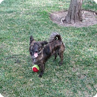 Adopt A Pet :: Kylo - Lomita, CA
