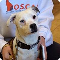 Adopt A Pet :: Brutus - Sparta, NJ