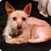 Adopt A Pet :: ABBY - Beverly Hills, CA