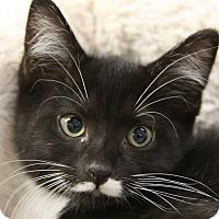 Adopt A Pet :: Gamma - Sarasota, FL