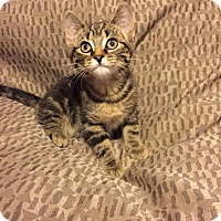 Adopt A Pet :: Calley - Woodstock, ON