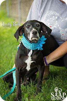 Labrador Retriever Mix Dog for adoption in Newport, Kentucky - Lady Bell