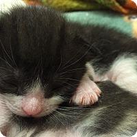 Adopt A Pet :: Hery - Delray Beach, FL
