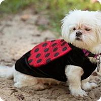 Adopt A Pet :: Breezy - Tallahassee, FL