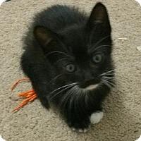 Adopt A Pet :: Kura - Yorba Linda, CA