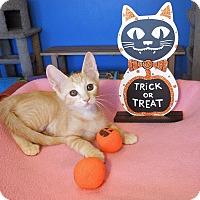 Adopt A Pet :: Stella - Glendale, AZ