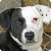 Adopt A Pet :: Juniper - Ruidoso, NM