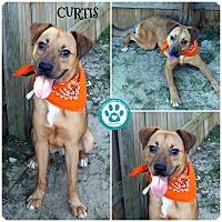 Adopt A Pet :: Curtis - Kimberton, PA