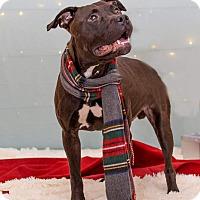 Adopt A Pet :: Luke ** Dog of the Week ** - Flint, MI