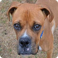 Adopt A Pet :: TATUM - Plano, TX