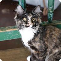 Adopt A Pet :: Chex - San Antonio, TX