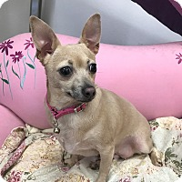 Adopt A Pet :: Bambi - Las Vegas, NV